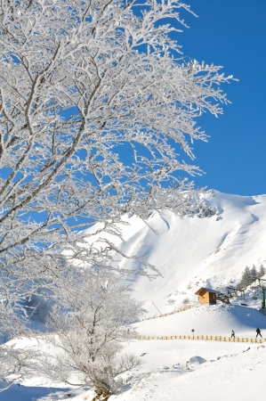 massif: branches of a tree covered with snow in front of a lift under a beautiful blue sky