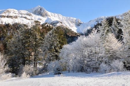 massif: firs under snow in the foothills of the Massif Central Stock Photo