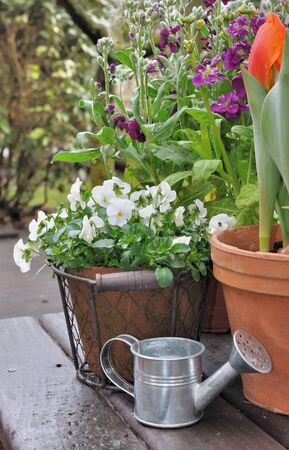 spring flowers in pots in rainy weather Stock Photo - 19023317