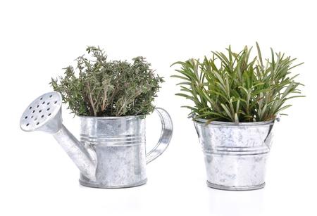 bouquets de thym et de romarin dans des petits pots décoratifs en métal