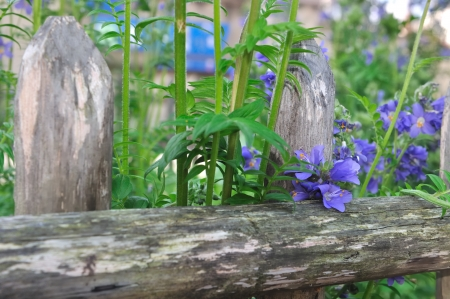 a pretty ornate wooden fence photo