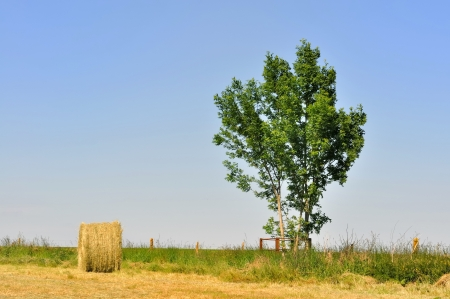 hayrick: hayrick  in a field near a young tree under blue sky