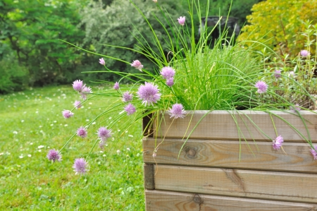 planter of aromatic plants with chives flower in wooden pot photo