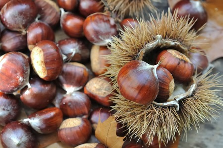 close on chestnuts in a prikly shell
