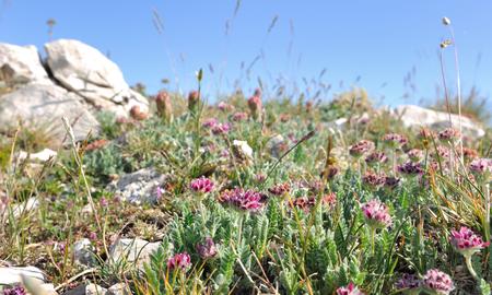 nestled: wild flowers nestled in the rocky mountain