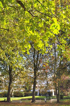 garden city: �rboles con follaje verde de una ciudad jard�n residencial