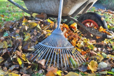 rake to collect  leaves near an old wheelbarrow Stock Photo