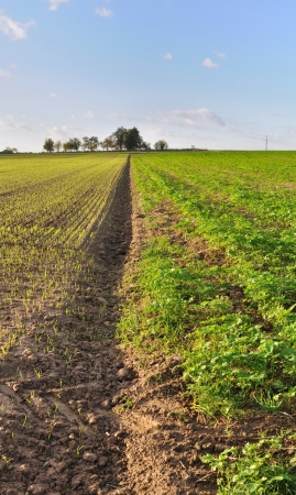 furrow: furrow through two fields of different crop
