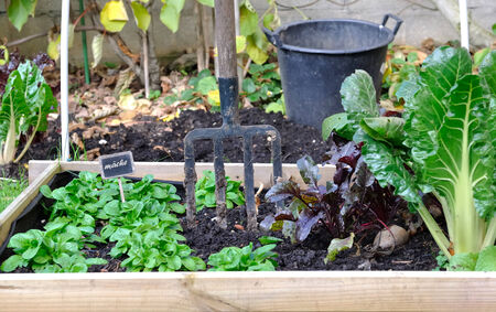 small square of vegetable garden with autumn vegetables