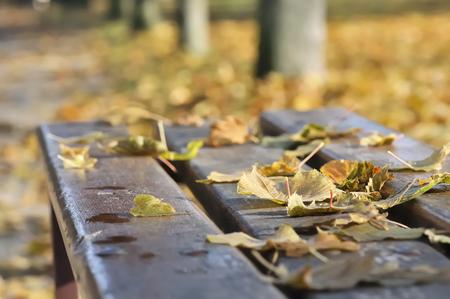 dead leaves: hojas muertas en un banco en un parque