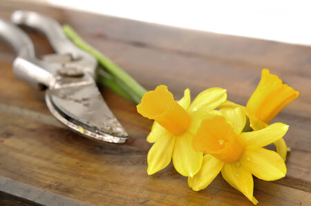 small bouquet of freshly picked daffodils on a board