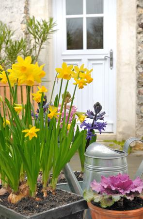 Frühlingsblumen an der Haustür des Hauses Standard-Bild - 25812560