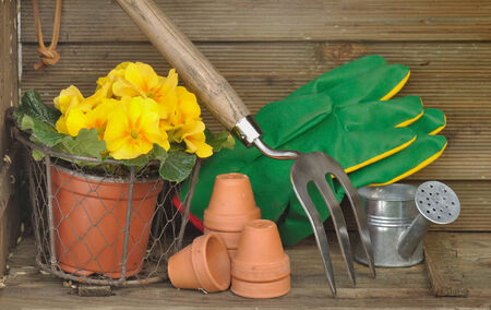 gardening accessories and primroses in pots in a wooden crate photo