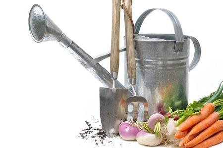 Vers geoogste groenten met gieter en hulpmiddelen op witte achtergrond