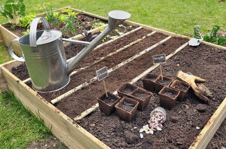 seed pots: seed, biodegradable pots for seedlings in a small garden Stock Photo