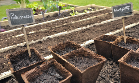 biodegradable: seeds and seedlings in biodegradable pots for little vegetable garden