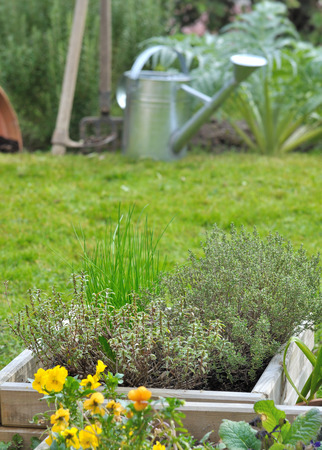 aromatic plants in a pot in front of vegetable garden with tools  photo