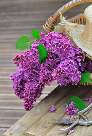 planck: lilac flowers in a basket placed on a wooden plank with shears Stock Photo