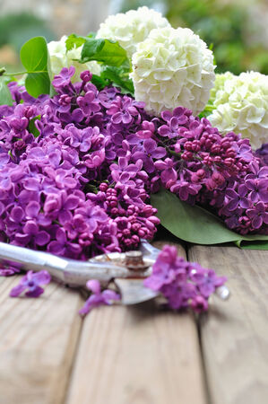 planck: lilac flowers freshly picked on wooden board
