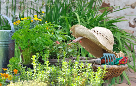 herb garden: gardening tools in a basket with straw hat among aromatic herbs and flowers