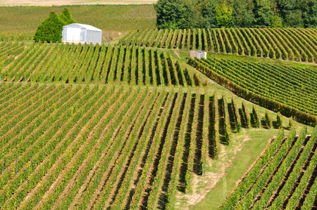 terroir: landscape of a vineyard geometric shapes Stock Photo