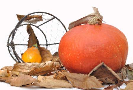 dead leaves: la calabaza en las hojas muertas en el fondo blanco Foto de archivo