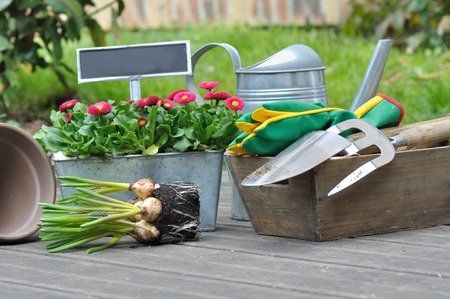 Perfect Flower Bulbs And Gardening Accessories On Wooden Floor Photo