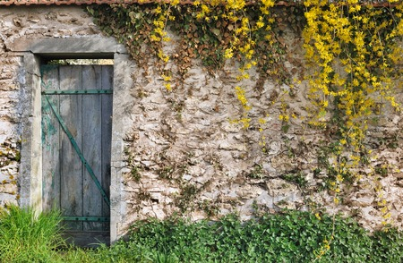 tatty: vegetation on a stone wall of a garden with tatty wooden door