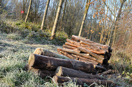 wood heating: woodpiles for heating stacked near a wood