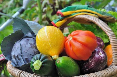 Bunt und schön Gemüse im Korb in einem Gemüsegarten Standard-Bild - 34751714