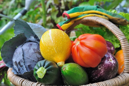 colorful and beautiful vegetables in basket in a vegetable garden
