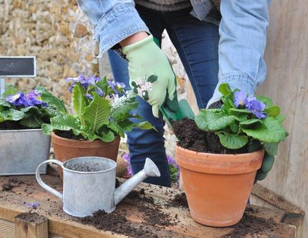 vrouw doet de bloem potten buiten Stockfoto