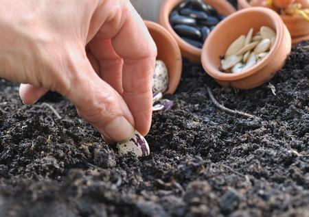 siembra: mujer semillas de siembra mano en el jard�n vegetal del suelo