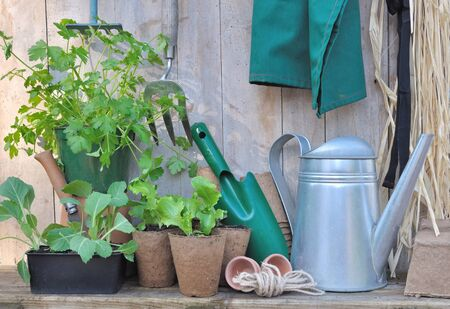 Beau Stock Photo   Tools And Gardening Accessories With Seedlings On Wooden  Background