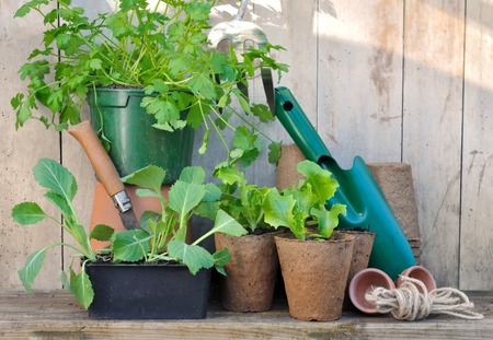 Plants And Gardening Accessories With Tools On Wooden Background Stock  Photo, Picture And Royalty Free Image. Image 37242400.