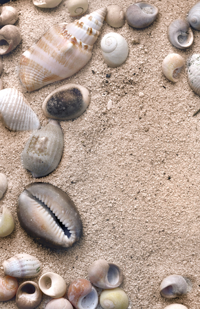pearly: some pearly seashell in the sand Stock Photo