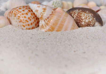 pearly: close on pearly seashell in the sand Stock Photo