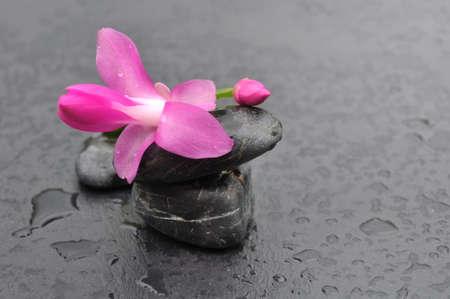 black pebbles: pretty cactus flower on black  wet pebbles