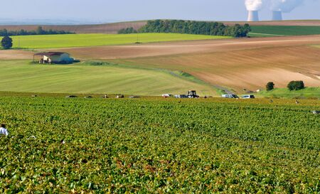 fireplaces: landscape of Champagne during the harvest with fireplaces a background in nuclear plant