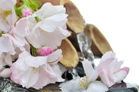 bamboo fountain: cherry blossoms in front of a bamboo fountain on white background