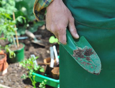 gardening gloves: gardener hand  holding tool and gardening gloves behind garden