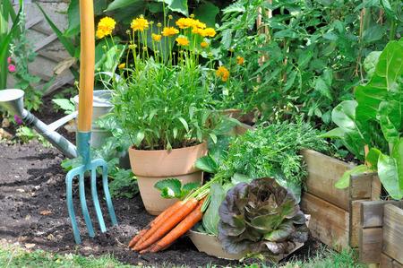 Vers geoogste groenten in een kleine bloementuin