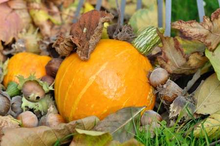 vegetal: squash, dead leaves, dried fruit on the ground