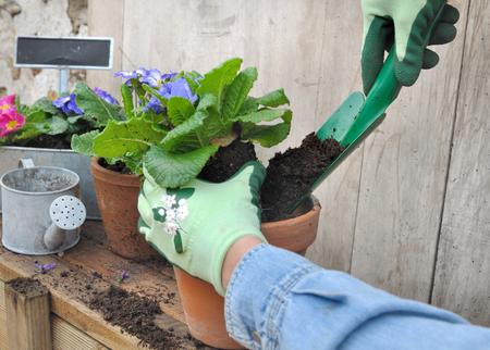 potting: woman potting flowers outdoor