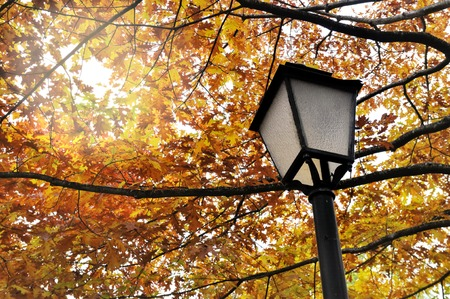 lamp post: lamp post under autumnal foliage Stock Photo