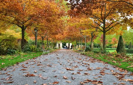 footpath crossing a city garden with golden autumnal foliage