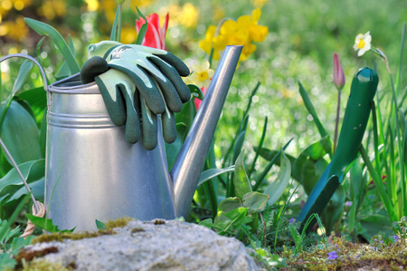 dibble: watering can, gloves ant dibble on the ground next to spring flowers