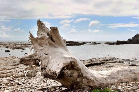 corse: driftwood on shore - Cap Corse