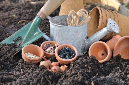 seed pots: seeds, bulbs and garden accessories in garden soil