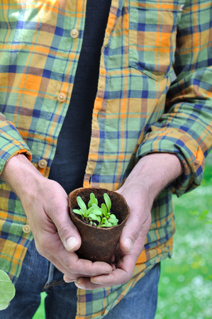 peat pot: man holding a peat pot for seedlings Stock Photo